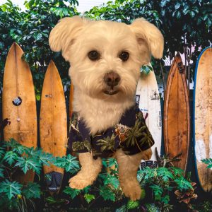 Dog Aloha Shirts